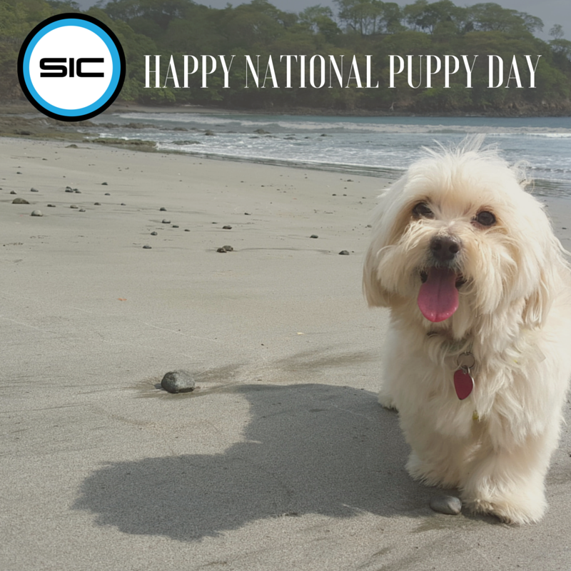 Happy National Puppy Day from our sic mascot, Riles! (3)
